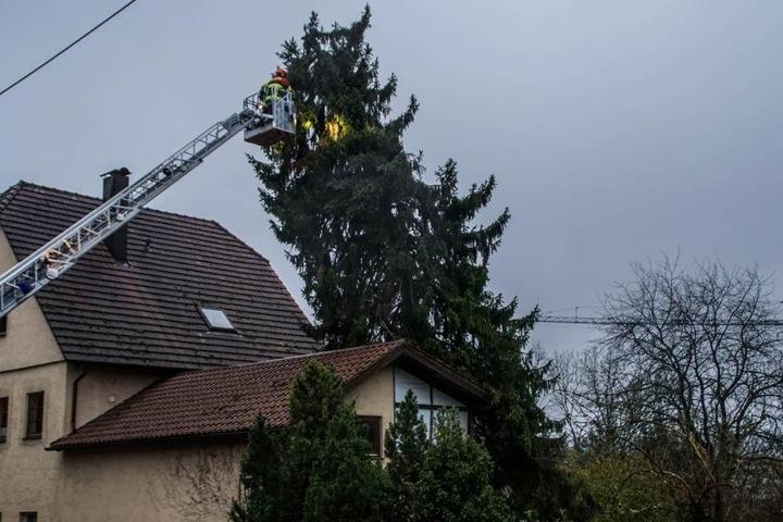 Auch Hausdächer hatte es erwischt. Die Feuerwehr musste diesen Baum mittels einer Drehleiter Stück für Stück absägen.