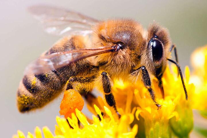 Die Kraft der Bienen wird für die Bio-Wickel genutzt.