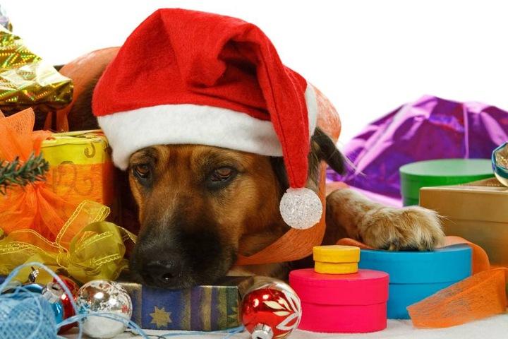 Ein Tier ist ein Lebewesen und kein Spielzeug, so der Minister. Daher sollte man den Kauf zu Weihnachten bedenken. (Symbolbild)
