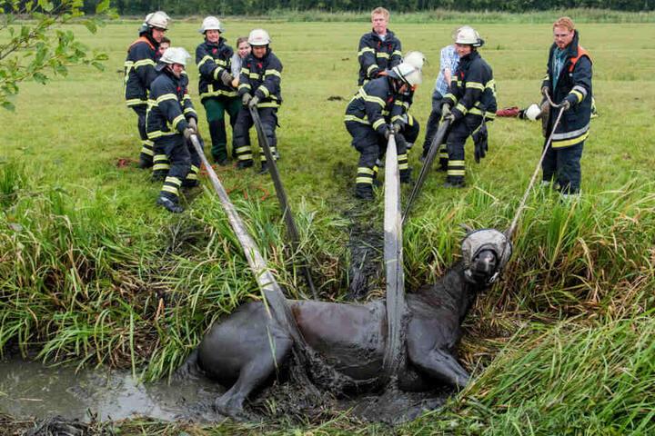 """Feuerwehrleute ziehen im Stadtteil Neuengamme die Stute """"Easy"""" aus dem schlammigen Graben."""