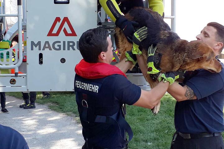 Die Rettungskräfte der Feuerwehr konnten den Vierbeiner mit einer Drehleiter aus der Isar retten.