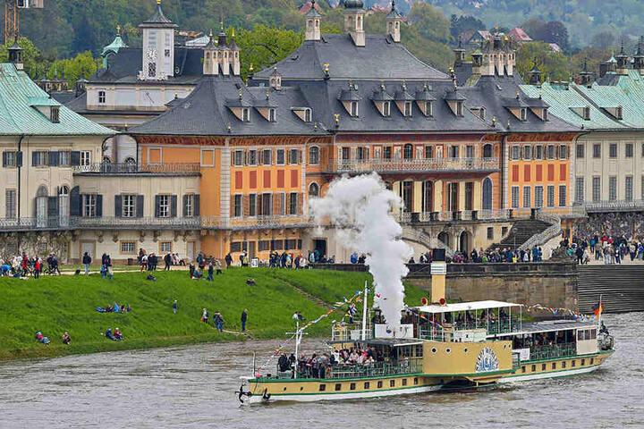 Die Dampferparade der Sächsischen Dampfschiffahrt zog am Montag auch in  Pillnitz viele Besucher ans Ufer.