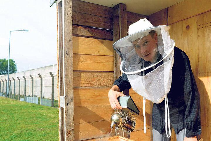 Hobby-Imker Jens Wachtel betreut das Bienenvolk in der JVA, die Häftlinge unterstützen ihn.