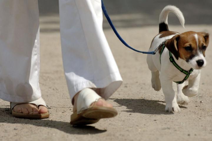 Der Jack-Russel-Terrier kehrte wohlbehalten zu seinem Besitzer zurück. (Symbolbild)