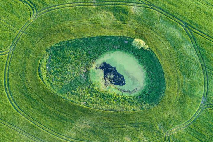 """Hier zu sehen ist ein Getreidefeld in Brandenburg mit einem sogenannten """"Soll"""", einem in der Regel kreisrunden oder ovalen Kleingewässer, das ein Biotop bildet."""