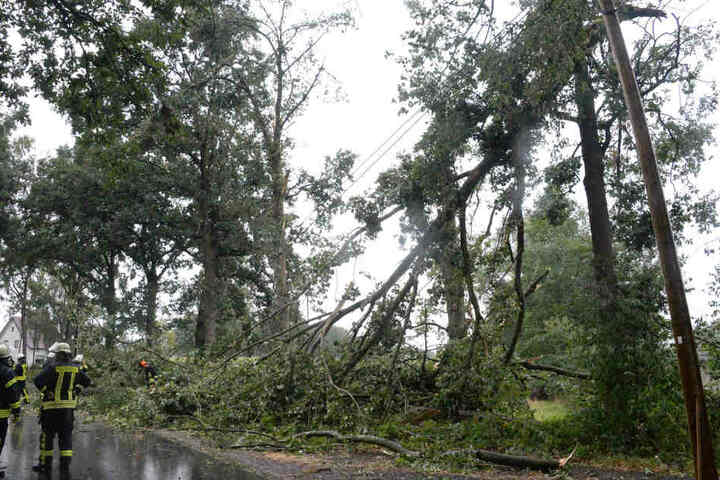 Die Bäume stürzten auch auf eine Stromleitung an der Kattenheider Straße in Gütersloh.