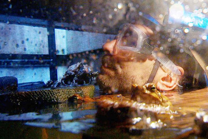 Marc musste in einen Kanal hinabklettern und Sterne finden. Natürlich war er nicht ganz allein da unten: Er traf auf Riesenkröten und Yabbie-Krebse, Aale, Schlammkrabben, Spinnen und ein Krokodil.