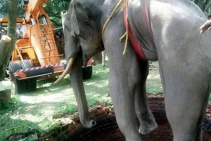 Rettung fast geglückt. Der Elefant wird mit einem Kran geborgen.
