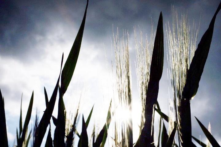 Vor allem die Landwirte könnten sich über ein wenig Regen freuen. (Symbolbild)