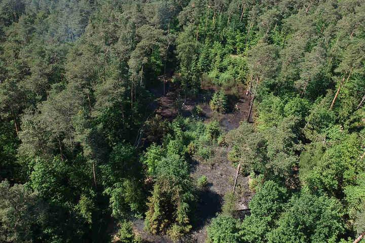 Diese Aufnahmen halfen den Kameraden den Waldbrand einzuschätzen.