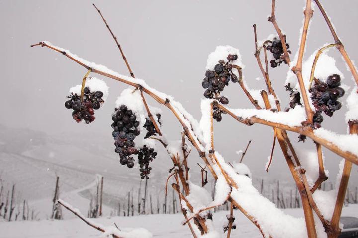 Bald kommt der Schnee wieder zu uns, wie hie rin Stuttgart-Rotenberg.