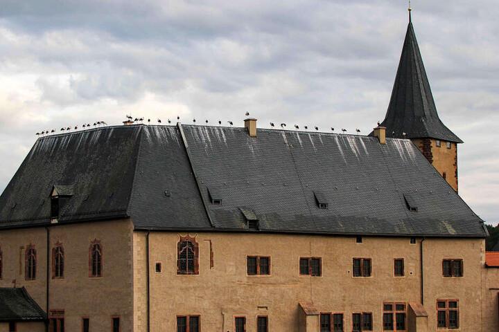 Wie aufgefädelt saßen 35 Störche auf dem Dachfirst von Schloss Rochlitz.