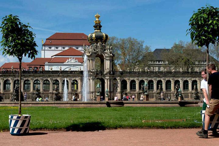 Insgesamt 76 Orangenbäumchen werden im Zwinger aufgestellt.