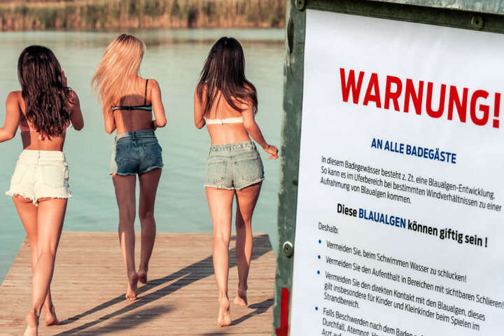 Schilder warnen vor den gesundheitsgefährdenen Cyanobakterien. (Bildmontage)
