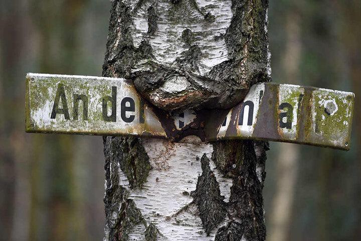 """Ein eingewachsenes Straßenschild mit der Aufschrift """"An der Stammbahn"""" zeugt von der einstigen Verbindung von Berlin nach Potsdam."""