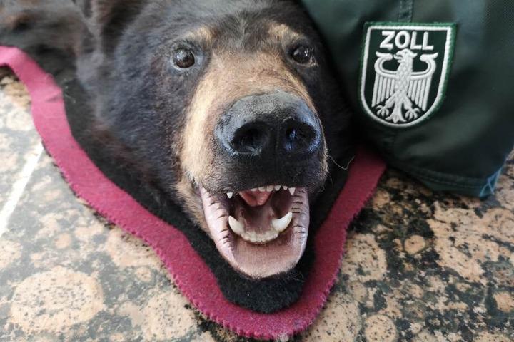 Nach dem Washingtoner Artenschutzübereinkommen sind Schwarzbären geschützt und dürfen nicht einfach nach Deutschland eingeführt werden.