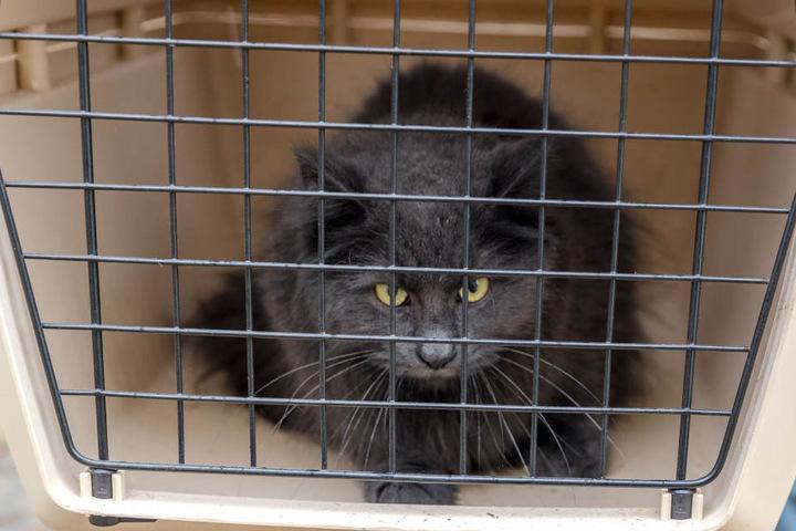 Die Angst ist ihr noch ins Gesicht geschrieben: Diese Katze wurde vor dem Flammentod gerettet.