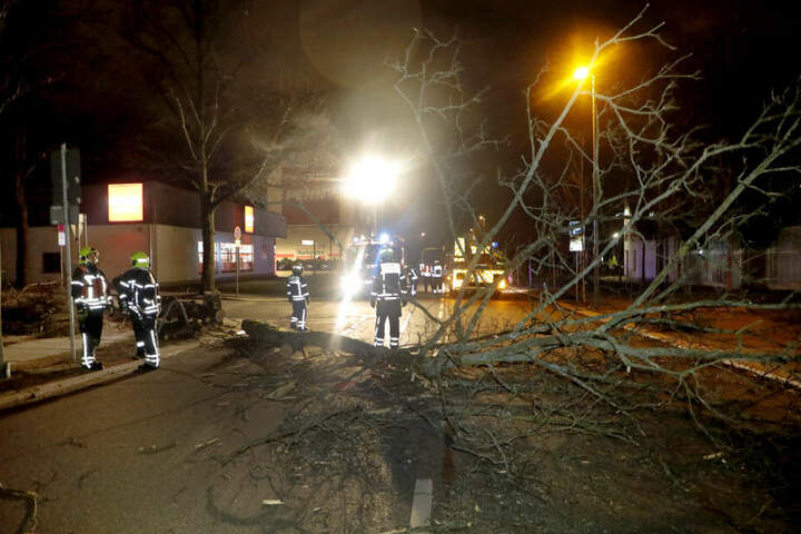 Ein Baum blockierte die Heinrich-Schütz-Straße.
