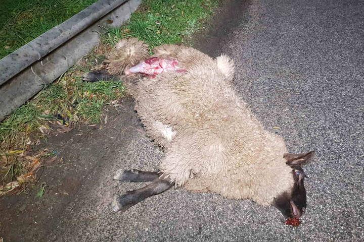 Insgesamt vier Tiere kamen bei dem Unfall ums Leben.