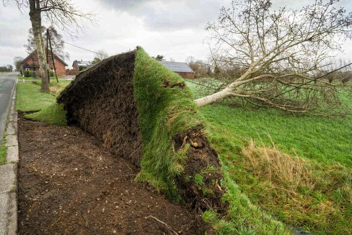 Zahlreiche Bäume wurden schon entwurzelt.