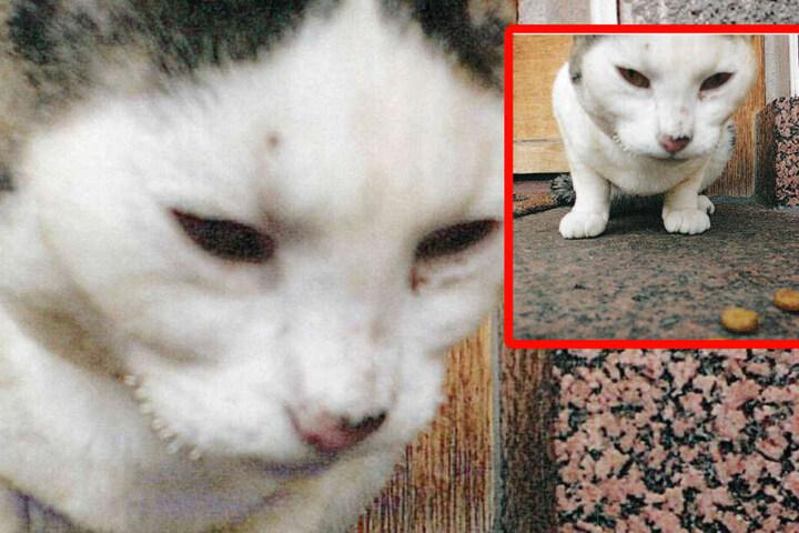 Mit diesen beiden Bildern der verletzten Katze sucht die Polizei nach dem Besitzer und nach dem Tier.