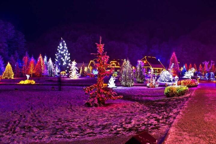 Was gibt es Schöneres, als eine Woche vor Weihnachten in einem Adventswald zu verbringen?
