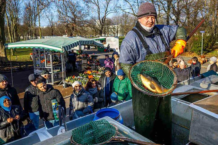 Fischwirt David Fichtner (32) hatte reichlich Karpfen im Angebot.
