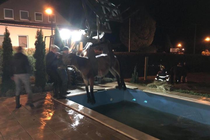 Mit einem Radlader wurde das Pferd aus dem Pool geholt.