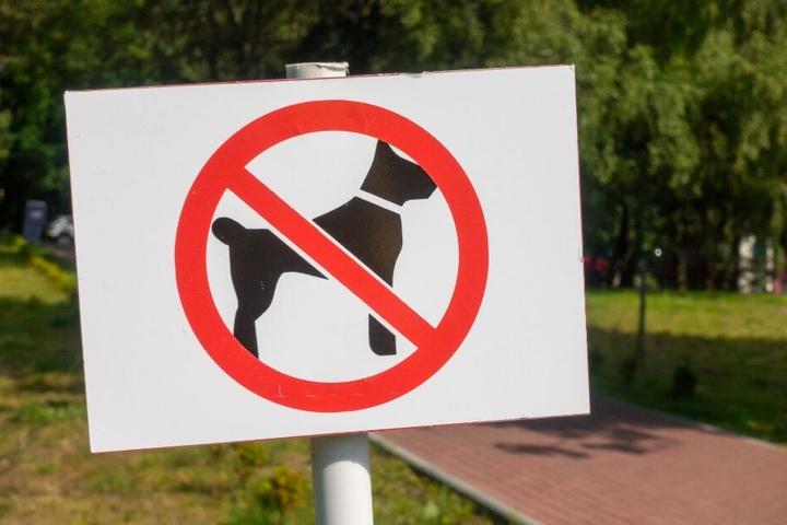 In dem Park herrscht eigentlich ein Hundeverbot. (Symbolbild)