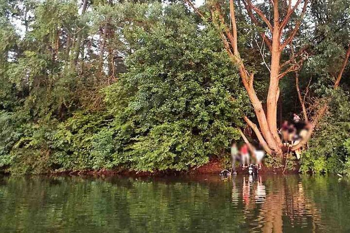 Von diesem Baum war der Soldat ins Wasser gesprungen.