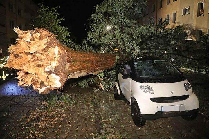 Der Smart ForTwo wurde beschädigt, die Feuerwehr konnte den Baum vom Auto ziehen.