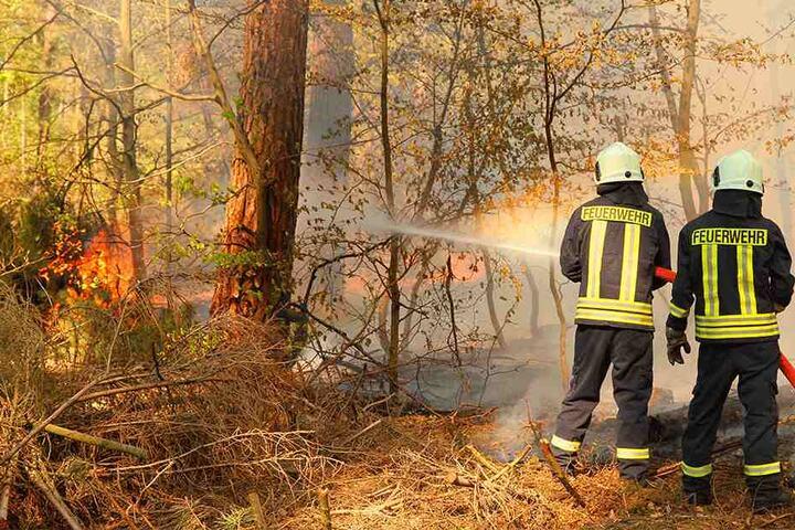 Ein brennender Kiefernwald. Solche Feuer können verheerende Folgen für eine ganze Region haben.