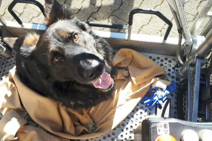 Daraufhin konnte der Hund vom Sonnenschutz gerettet werden.