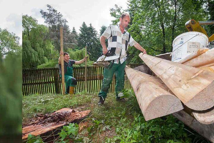 Die Aufräumarbeiten nach den schweren Unwetterschäden im Tierpark Hirschfeld dauerten bis gestern noch an.