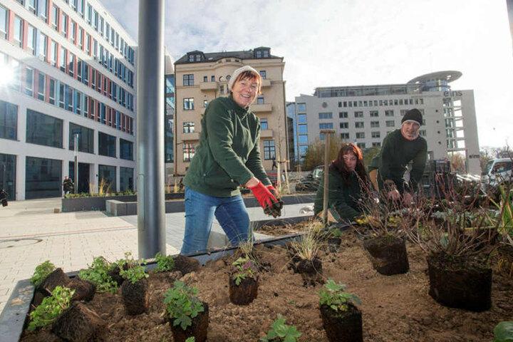 Rund um das Neue Technische Rathaus werden die Beete bepflanzt. Bäume entlang der Bahnhofstraße, ein neuer Fußweg und eine Bushaltestelle folgen nach dem Winter.