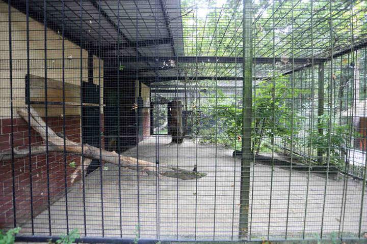 Der Tierpark ist wieder geöffnet, das Leopardengehege bleibt wohl heute leer.