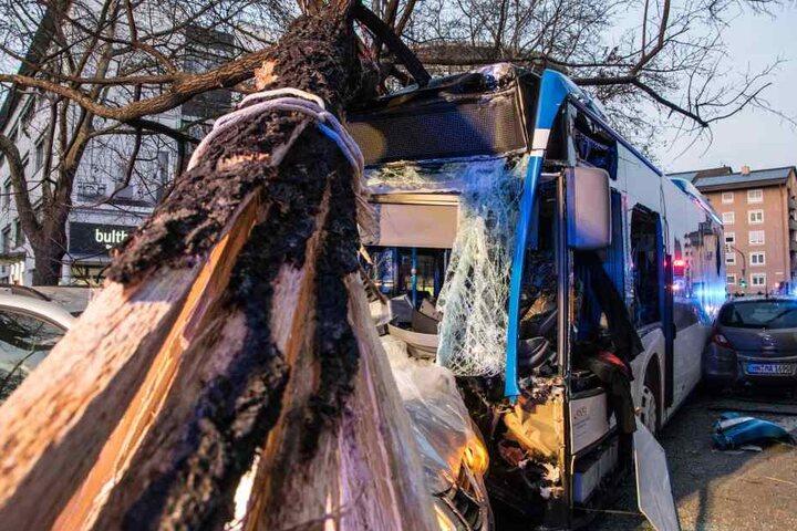 Nachdem der Bus gegen einen Range Rover fuhr, krachte er gegen einen Baum.