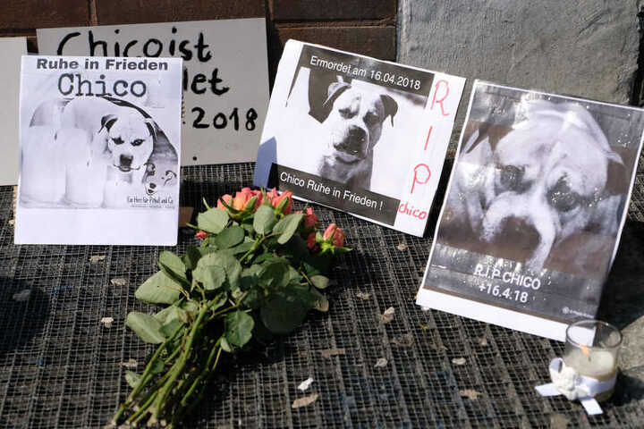 Am Sonntag hatte es in Hannover eine Mahnwache für den eingeschläferten Hund gegeben, der zwei Menschen tot gebissen hatte.