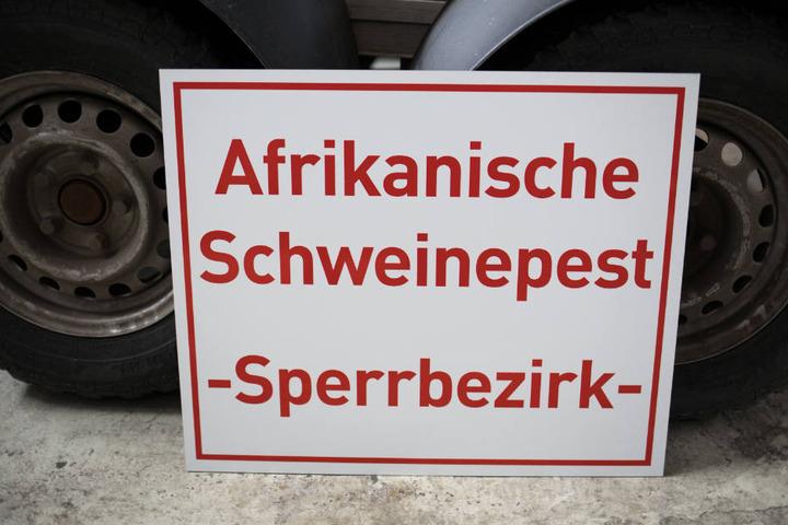Die Afrikanische Schweinepest sorgt bei Bauern in Bayern weiter für große Sorgen. (Archivbild)