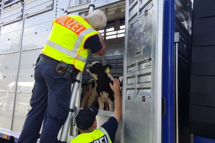 Die Polizei fand aber auch gute Transportbedingungen und gesunde Tiere vor.