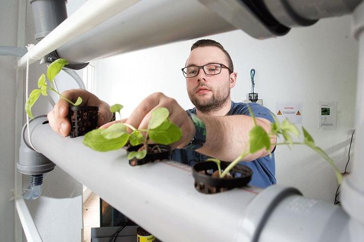 Eric Haubold (26) plant jetzt mit seinen Mitstreitern ein vierstöckiges Gewächshaus, welches nach dem Aquaponik-Prinzip funktioniert.
