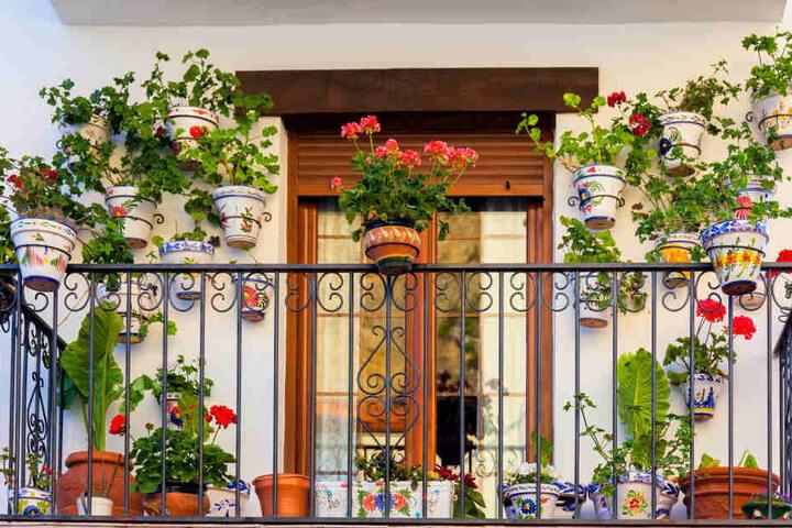 Die Auswahl der richtigen Balkonpflanzen ist gar nicht so einfach, wie es klingt. Manche Pflanzen mögen es sonnig, andere schattig.