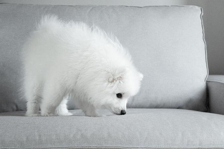 Wahnsinn: Ein Hund hat je nach Rasse zwischen 120 und 220 Geruchszellen.