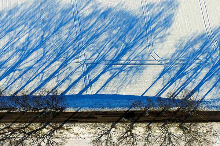 Weltweit diskutieren User über die merkwürdigen blauen Schatten der Bäume.