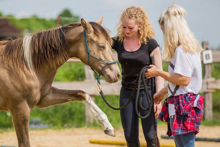 Die ausgebildete Pferde-Osteopathin hilft Menschen, die sensiblen Tiere  besser zu verstehen, auch bei Problemen oder auch Verletzungen.
