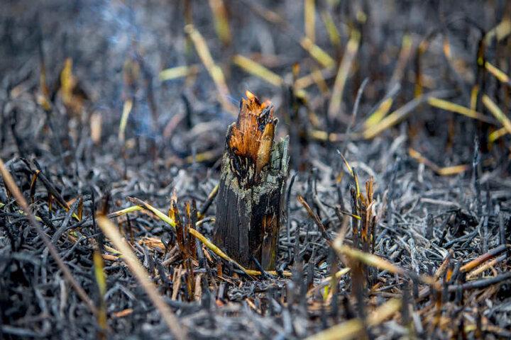 Wald- oder Flächenbrände müssen schnell erkannt und beseitigt werden, bevor die Flammen sich ausbreiten, in den Boden fressen oder Glutnester bilden.