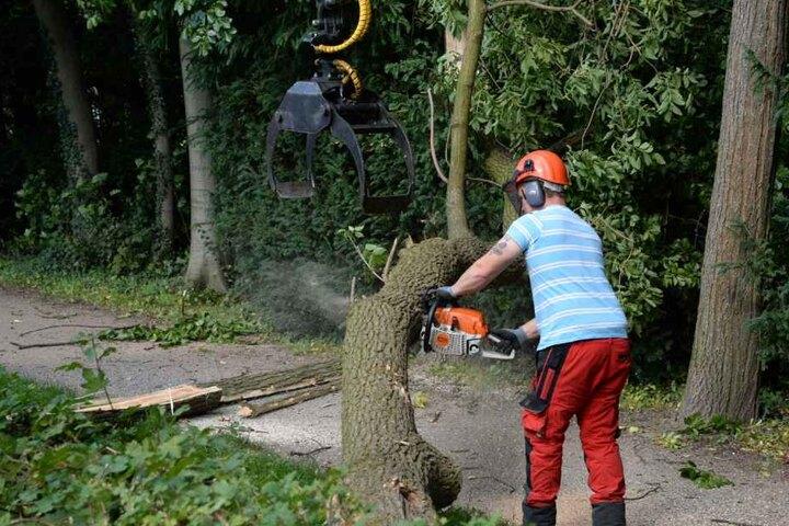 Der Baum wurde rechtzeitig abgesägt.