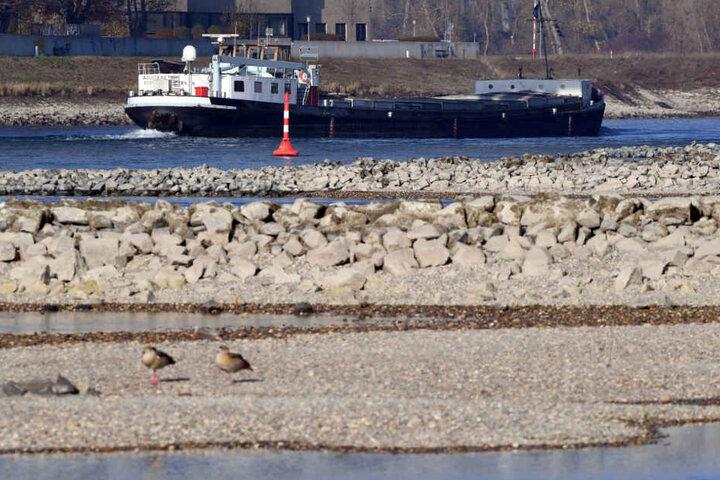 In Karlsruhe Maxau ragten durch das Niedrigwasser im November noch Sandbänke aus dem Wasser.