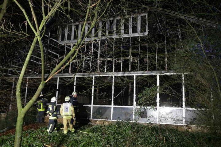 Die Fenster im Affenhaus des Krefelder Zoo wurden zerstört. Alle Tiere im Affenhaus starben.