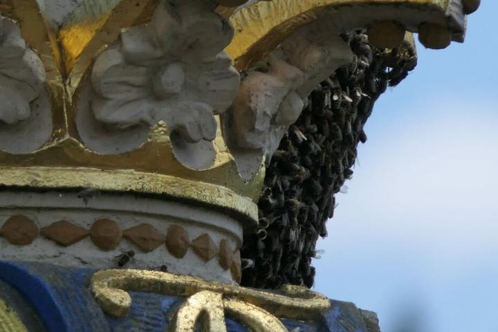 Die Tiere sollen sich auf einem Wappenstein angesiedelt haben.
